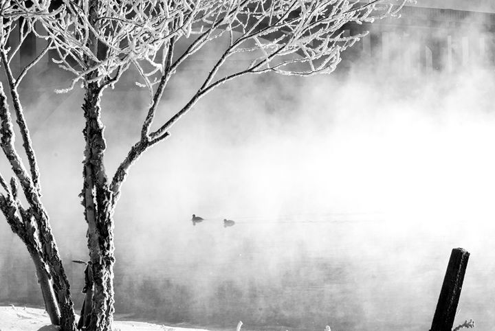 Frosted Silhouttes - Persinger Creations
