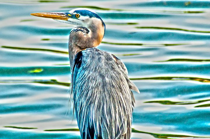Great Blue - Persinger Creations