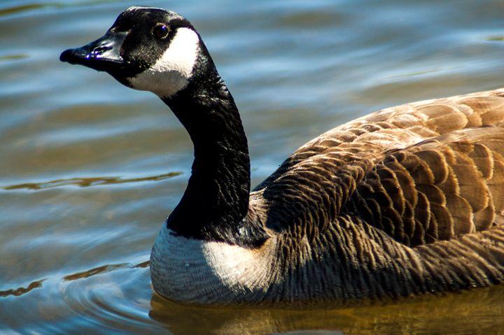 Goose - Persinger Creations
