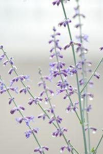 Purple Pastel - Persinger Creations
