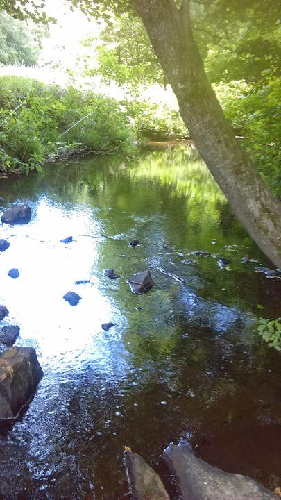 Creek - Cynthia L. Thompson