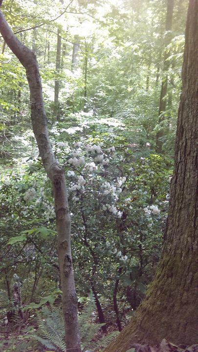 Trees.. - Cynthia L. Thompson