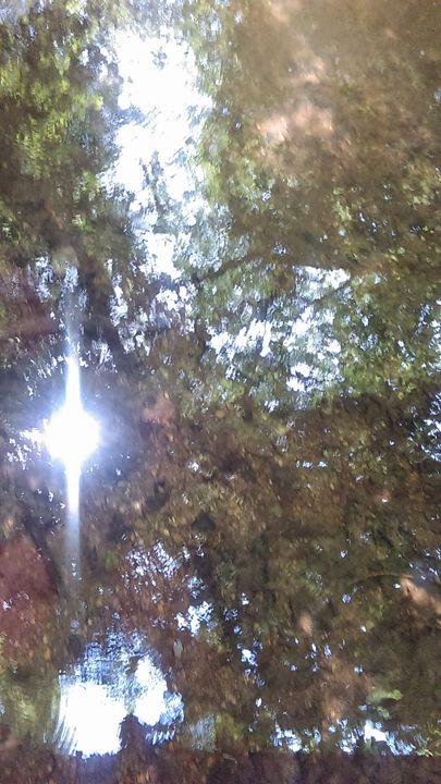 Through the Trees.... - Cynthia L. Thompson