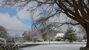 First Snow of 2017 - Cynthia L. Thompson