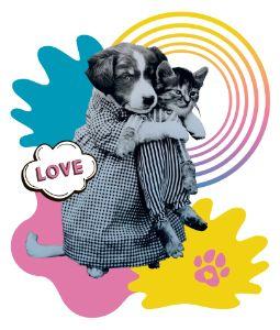 Funny puppy love kitten