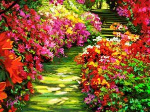 Carolina Garden - Sheila Flynt