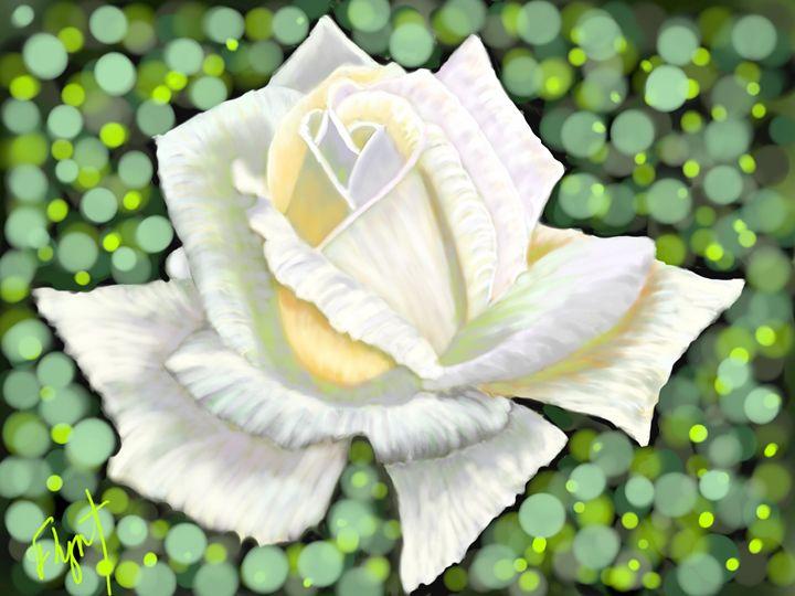 White Rose 10 - Sheila Flynt