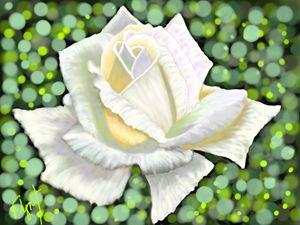 White Rose 10