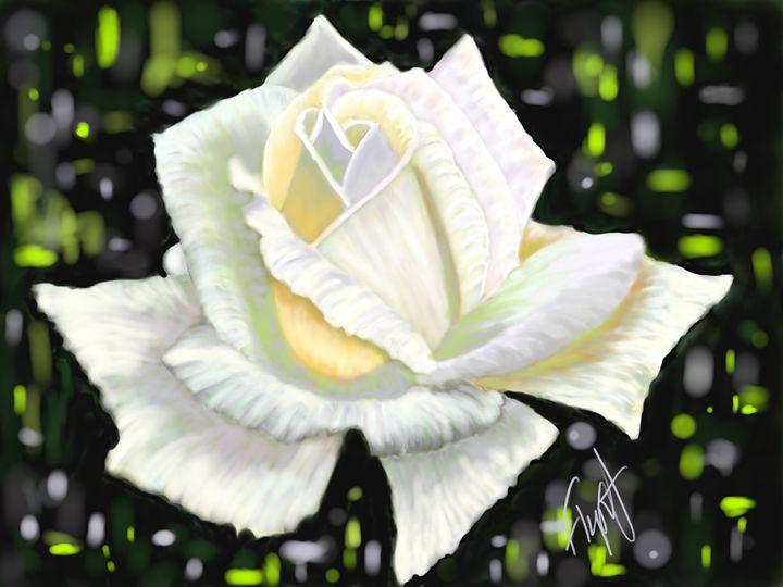 White Rose 11 - Sheila Flynt