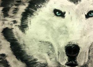 Siberian husky gaze