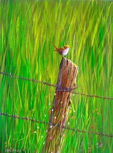 Pasture Wren