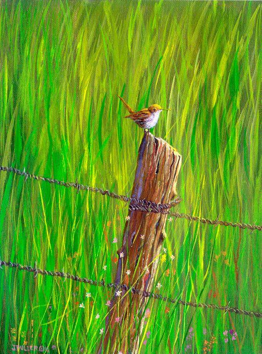Pasture Wren - John W Fuller