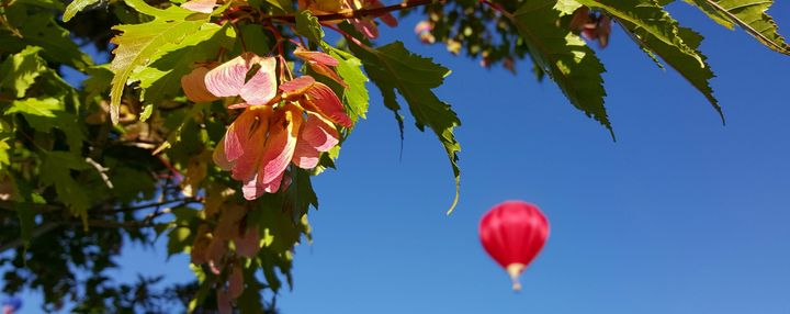 Balloon In The Sky - C.E-GODWIN