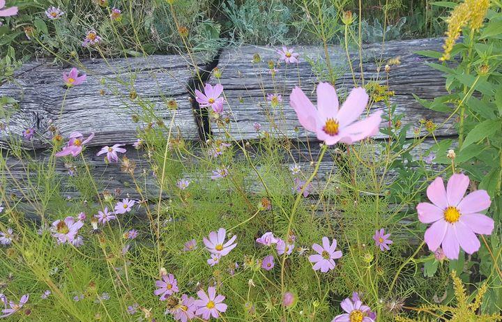 flowers - C.E-GODWIN