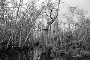 Everglades 20