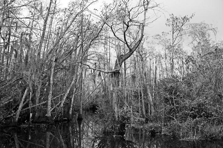 Everglades 20 - Photography by Michiale