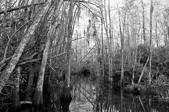 Everglades 21 - Photography by Michiale