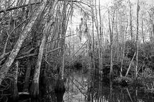 Everglades 21