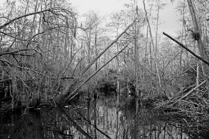 Everglades 22 - Photography by Michiale