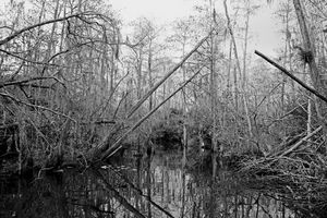 Everglades 22