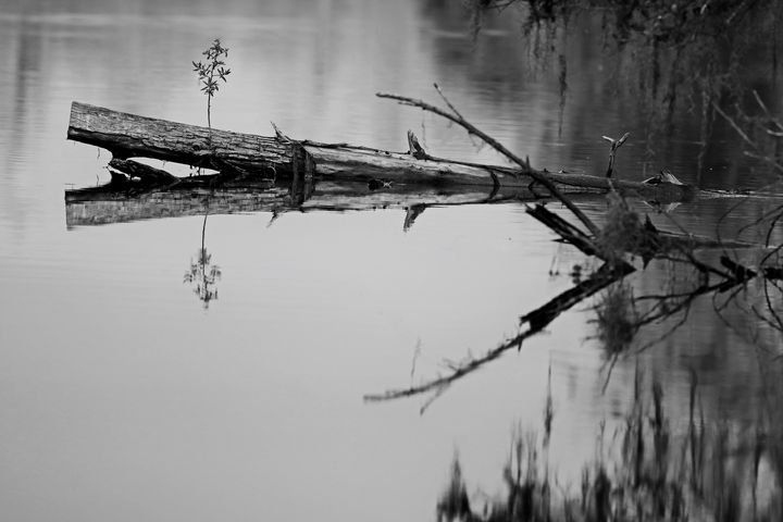 Everglades 23 - Photography by Michiale