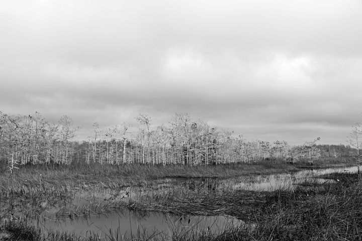 Everglades 24 - Photography by Michiale