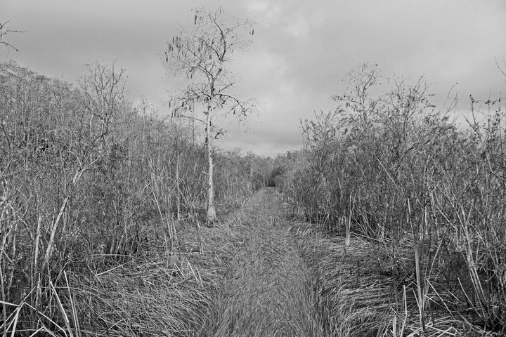 Everglades 25 - Photography by Michiale