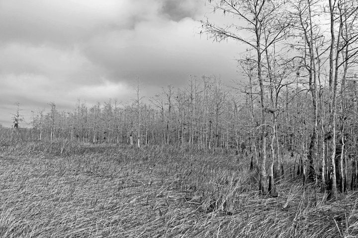 Everglades 26 - Photography by Michiale