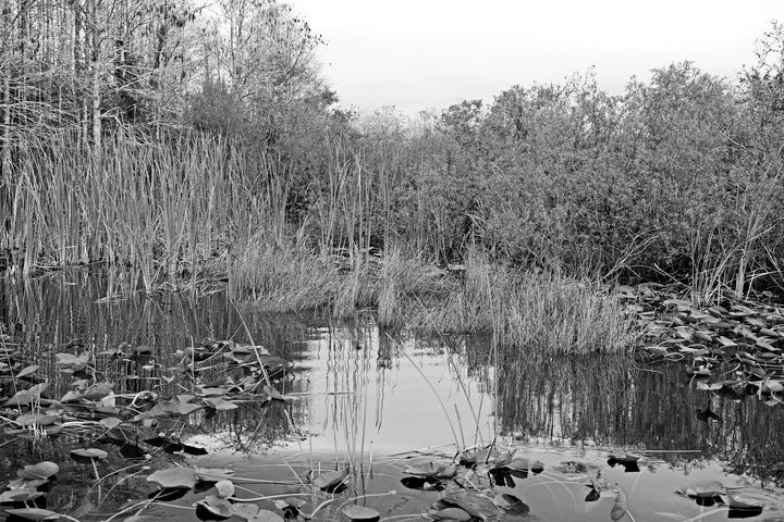 Everglades 27 - Photography by Michiale