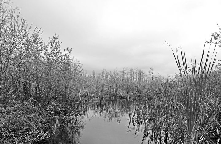 Everglades 28 - Photography by Michiale