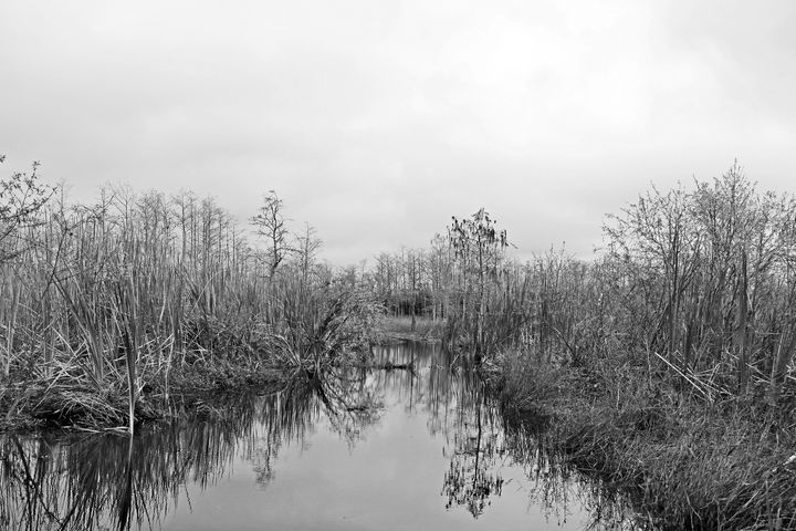 Everglades 29 - Photography by Michiale