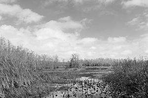 Everglades 32
