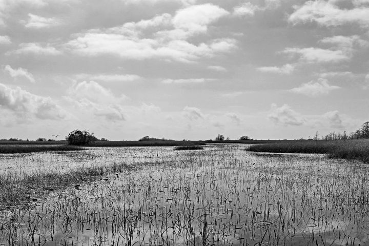Everglades 33 - Photography by Michiale