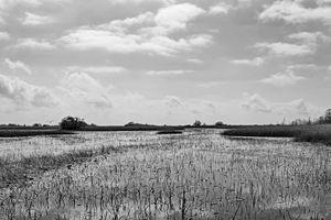 Everglades 33