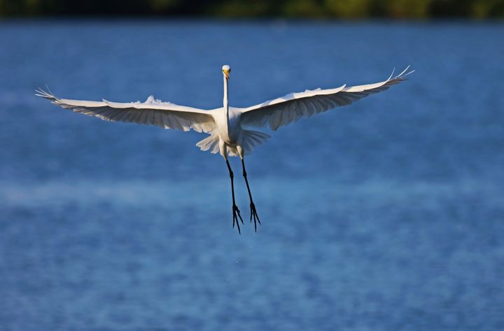 Coming in for a Landing at Ding II - Photography by Michiale