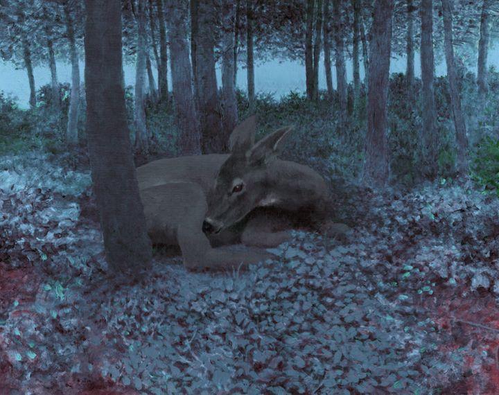 Resting deer_evening - Melvyn Hardman