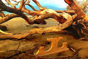 Table on Jekyll Driftwood Beach