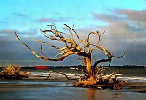 Driftwood Tree in the Surf at Jekyll