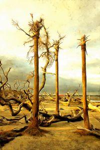 3 Stalwart Trees at Driftwood Beach