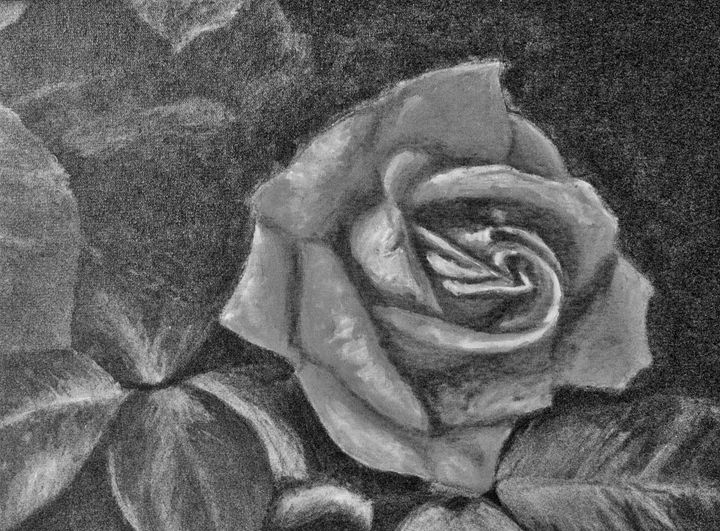 Gray Rose 1 DIGITAL - annabrazao