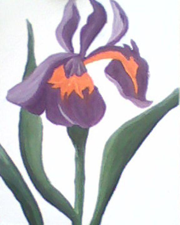 Iris - Aislinn