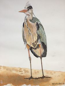 watercolor of a gray heron