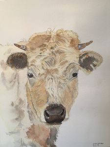 watercolor of a young cow