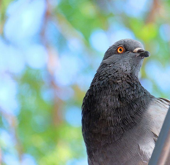 Birdseye View - The Snap Gallery 📸📸📸
