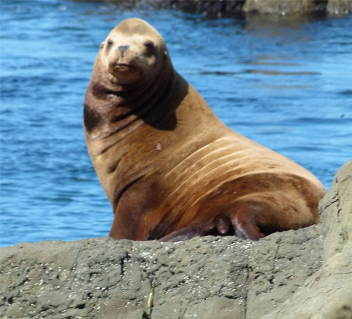 Sensational Sea Lion - Kimberly's Kreations