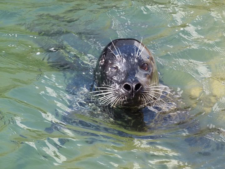 Harbor Seal - Kimberly's Kreations