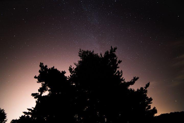 Tree and Stars - Myko Dela Cruz Photography