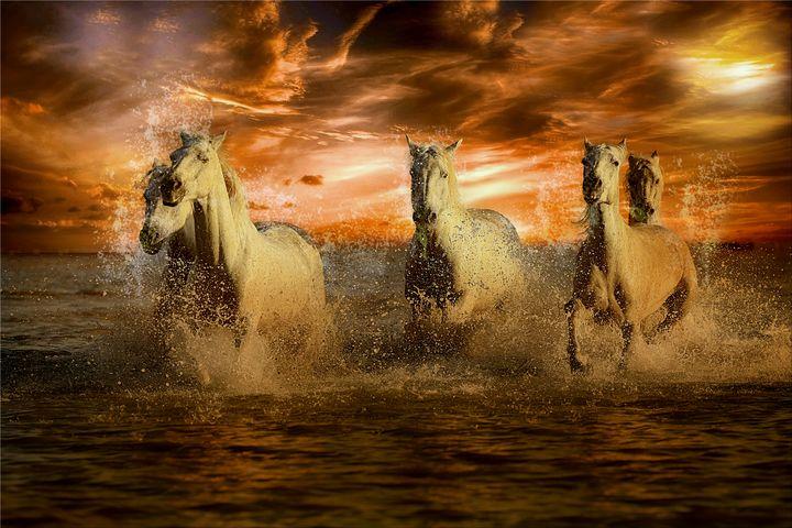 White Horses - Dave's Art