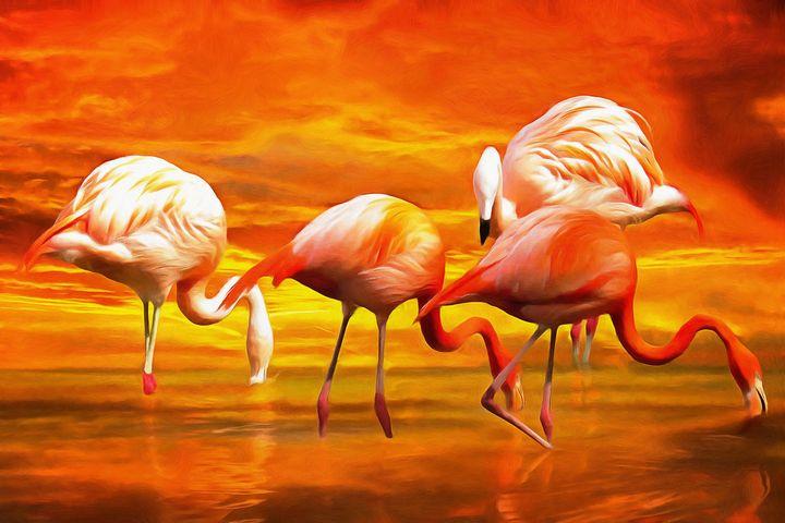 Four Flamingos by W Joseph - Joseph Wall Art