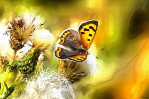 Butterfly in Wildflowers by W Joseph